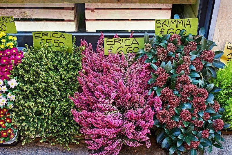 美丽的花在有价牌的商店 图库摄影