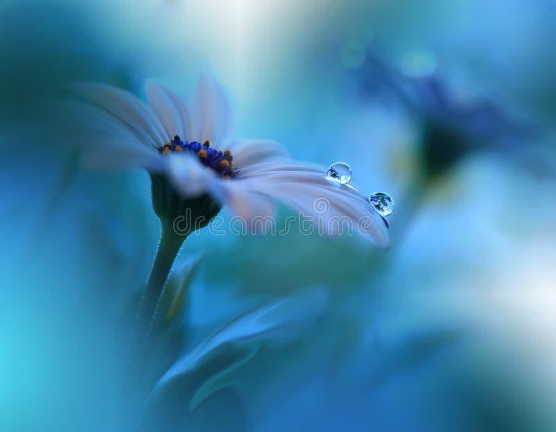 美丽的花在水,海洋概念中反射了 平静的抽象特写镜头艺术摄影 花卉幻想设计 库存图片