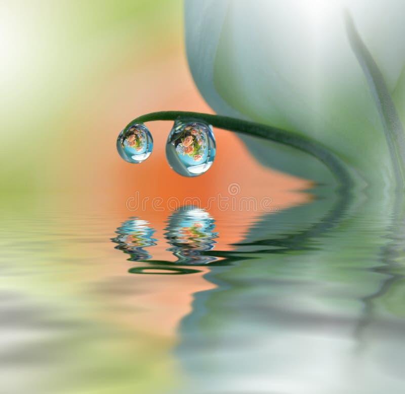 美丽的花在水,温泉概念中反射了 平静的抽象特写镜头艺术摄影 花卉幻想设计 免版税库存图片