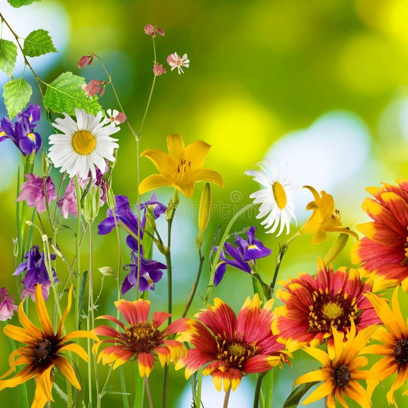 美丽的花在绿色背景的庭院里 免版税库存图片
