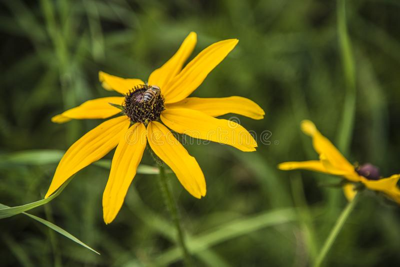 美丽的花本质上 图库摄影