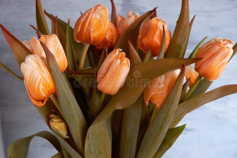 美丽的花束桔子郁金香 免版税库存照片