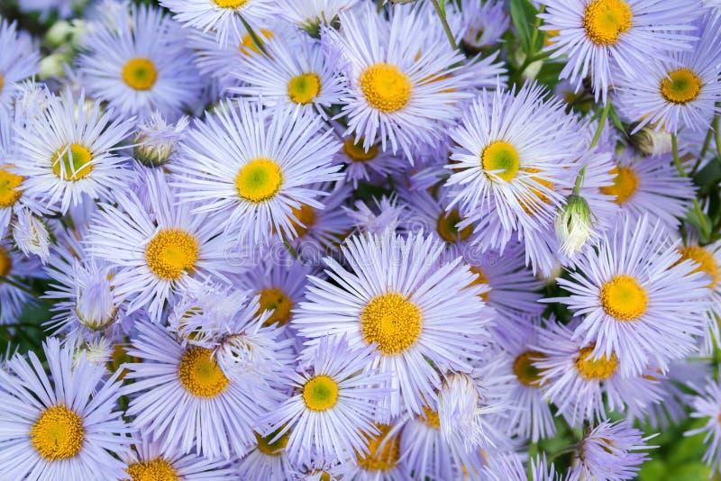 美丽的花束的样式从不同的紫罗兰色树荫的小小花的从上面 免版税库存图片