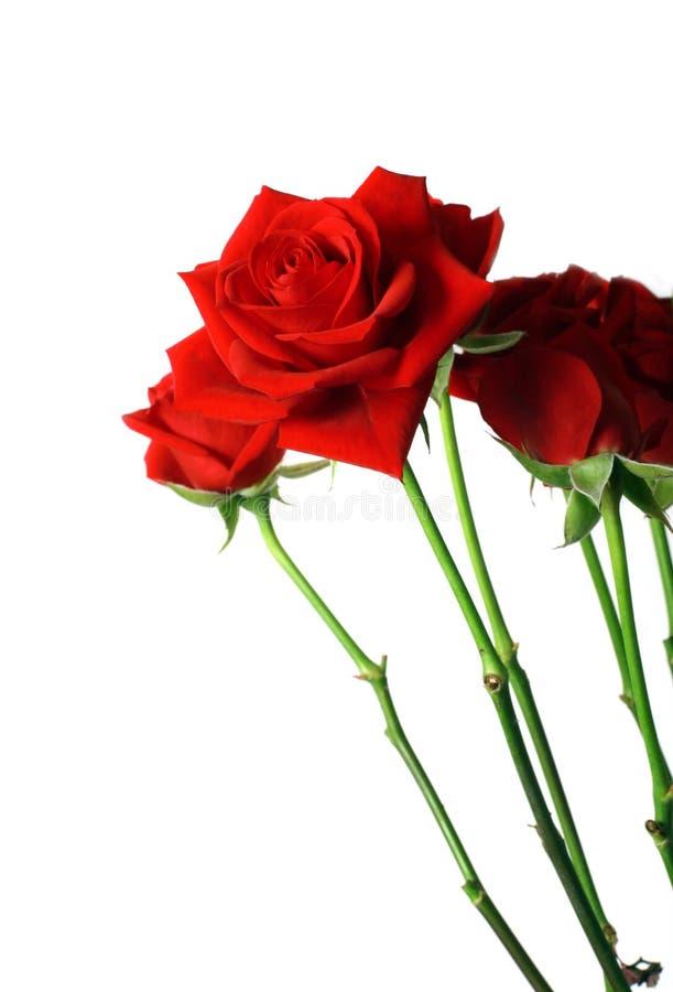 美丽的花束红色玫瑰 库存图片