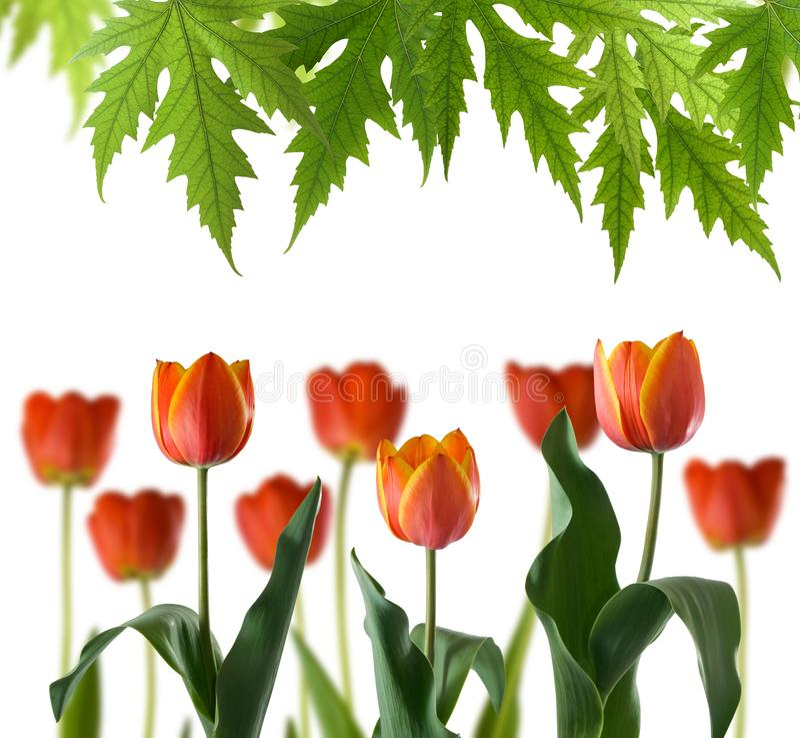 美丽的花的图象在公园 免版税库存图片