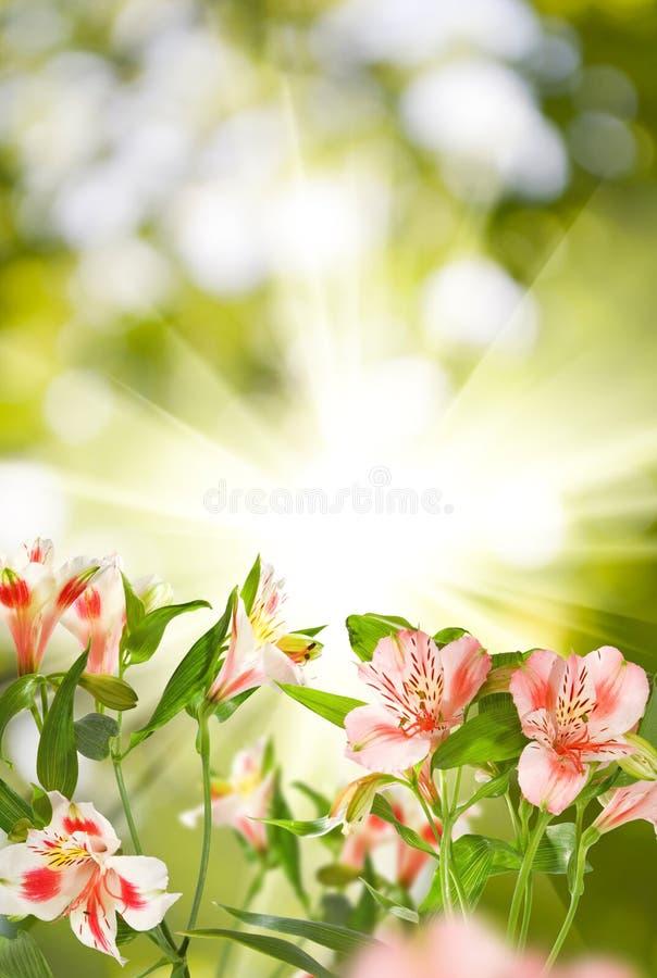美丽的花的图象在公园 库存照片