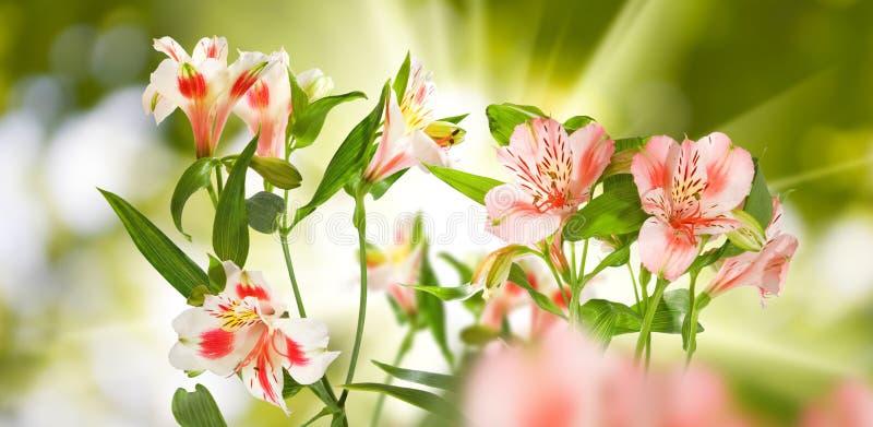 美丽的花的图象在公园 免版税库存照片