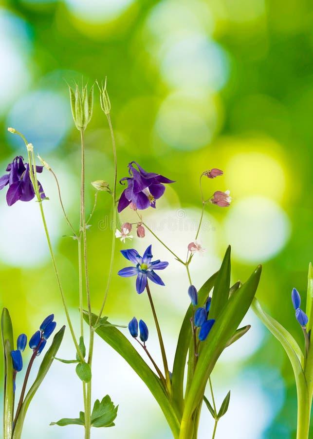 美丽的花的图象 免版税库存图片
