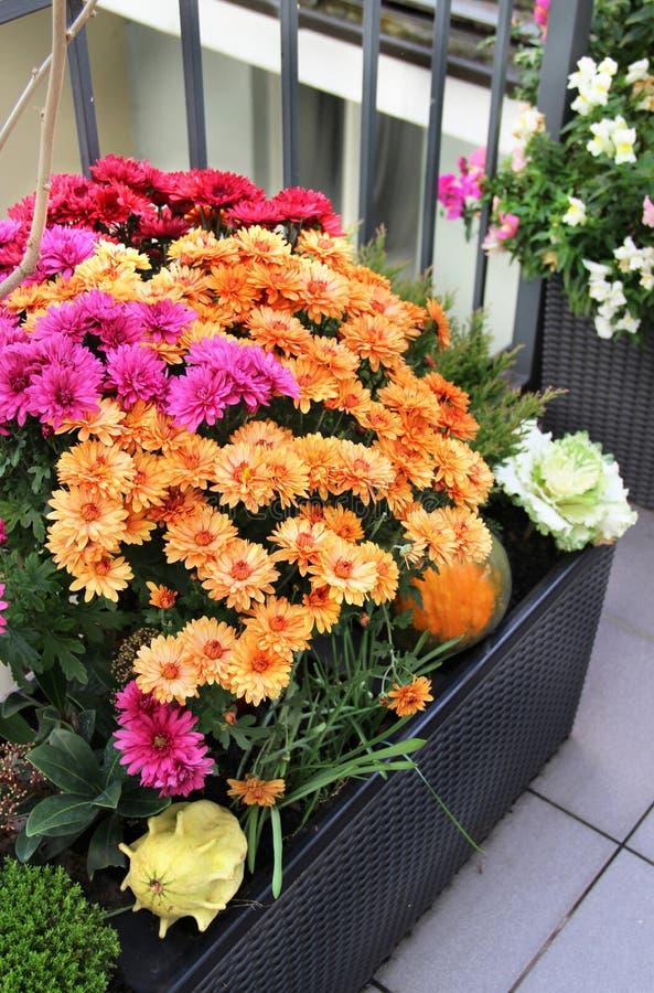 美丽的花的混合在秋天大阳台庭院里 免版税库存图片
