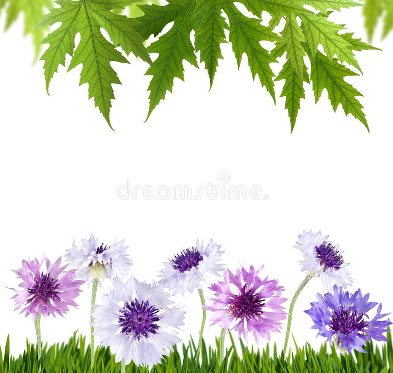 美丽的花的被隔绝的图象在公园特写镜头的 图库摄影
