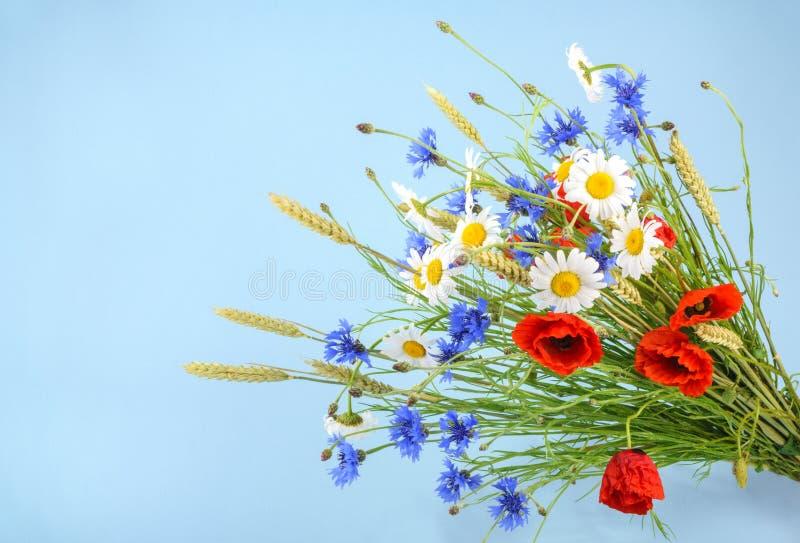 美丽的花矢车菊花束,春黄菊麦子和 免版税库存照片