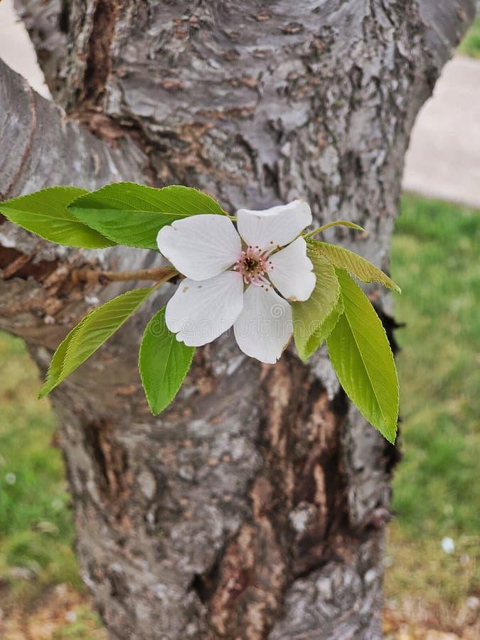 美丽的花结构树 库存图片