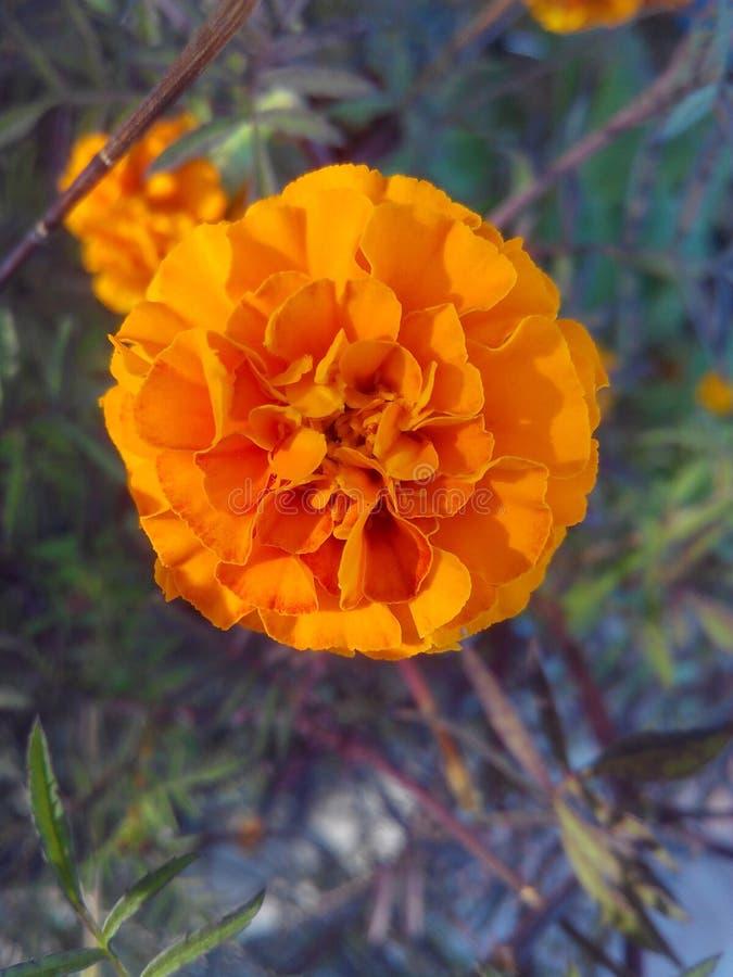 美丽的花 库存照片