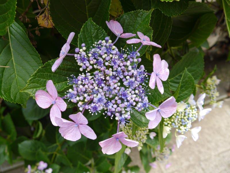 美丽的花unknowned名字 库存照片