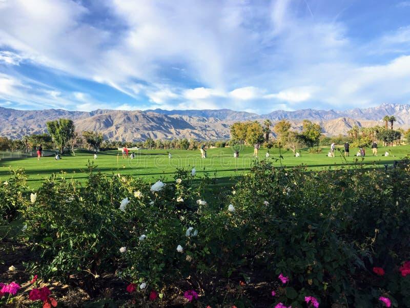 美丽的草开车范围在棕榈泉,加利福尼亚,美国 范围是与花的草在前景 免版税库存照片