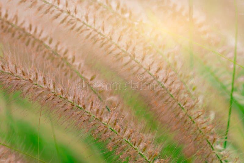美丽的草花宏观射击细节在被弄脏的绿色叶子的 爱平安和愉快的生活概念的背景 免版税库存照片