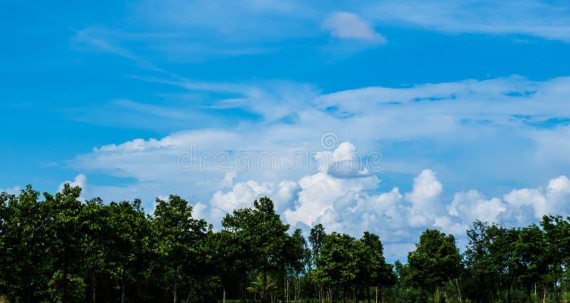 美丽的蓝天和白色多云背景在绿色树,泰国的看起来乡下风景明亮新鲜和 图库摄影