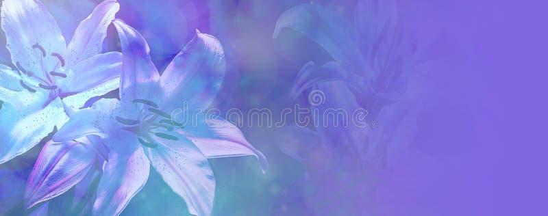 美丽的蓝色婚礼百合横幅 库存图片