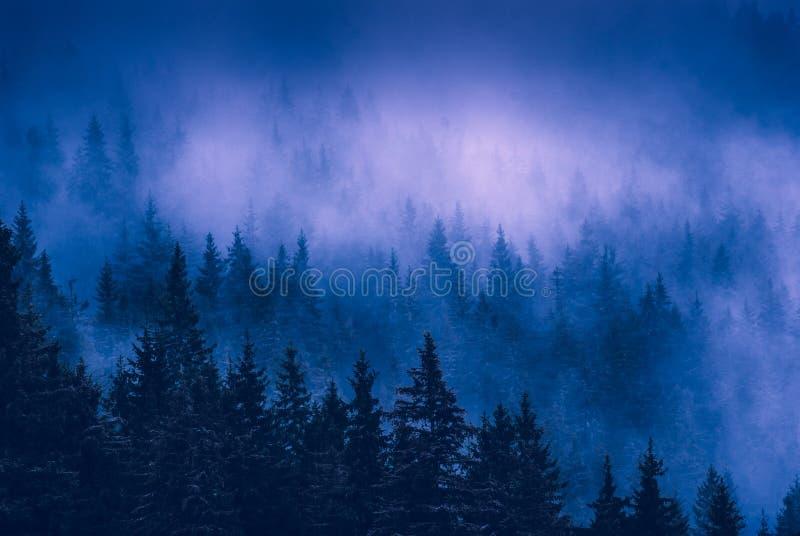 美丽的蓝色雾在一个喀尔巴阡山脉的有薄雾的森林里 库存图片