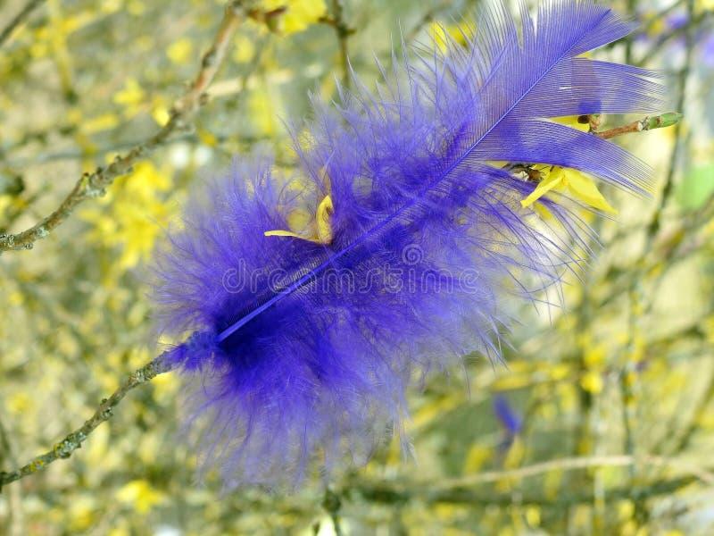 美丽的蓝鸫在植物,立陶宛用羽毛装饰 免版税图库摄影