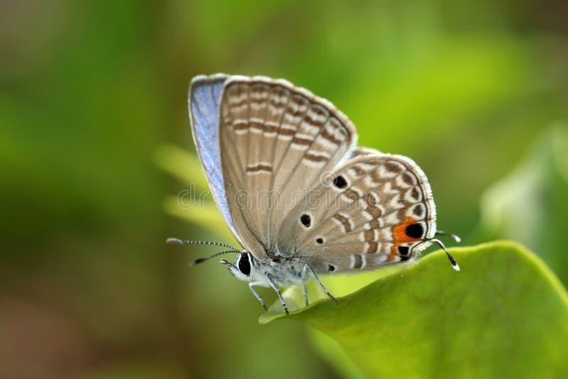 美丽的蝴蝶 免版税库存图片