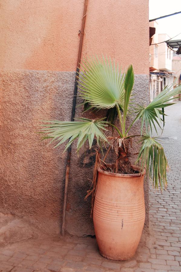美丽的街道植物装饰 库存图片
