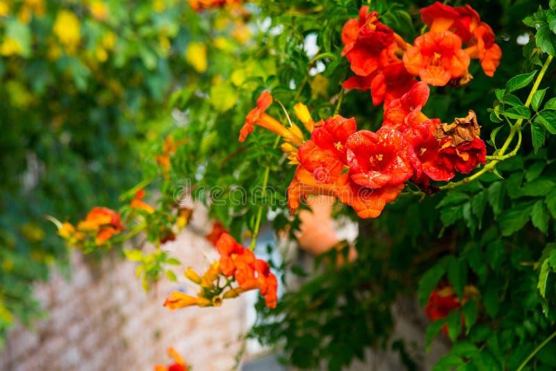 美丽的街道欧洲小镇 在地中海附近的一小镇 石墙,有花的绿色庭院 免版税库存照片