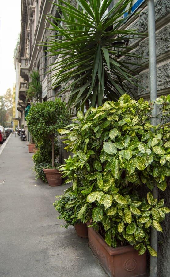 美丽的街道,有绿色植物的在灰色石墙附近,意大利,米兰花盆 库存照片