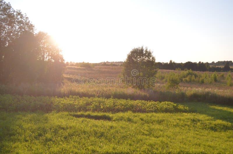 美丽的被日光照射了草甸 夏天晚上 室外看法 公园,森林,树 库存图片