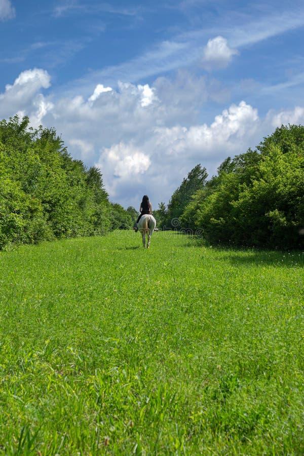 美丽的豪华的绿草围拢与高和厚实的灌木,与白色云彩在天际,在wh的妇女骑马的天空蔚蓝 库存照片