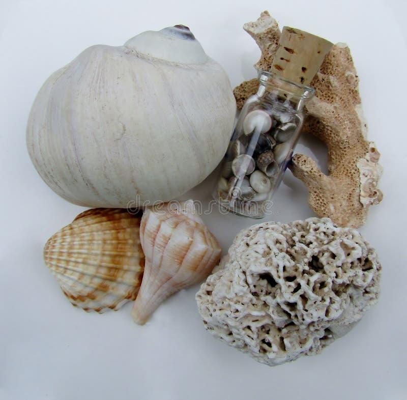 美丽的贝壳、海滩破旧的珊瑚片断和小玻璃瓶 免版税图库摄影