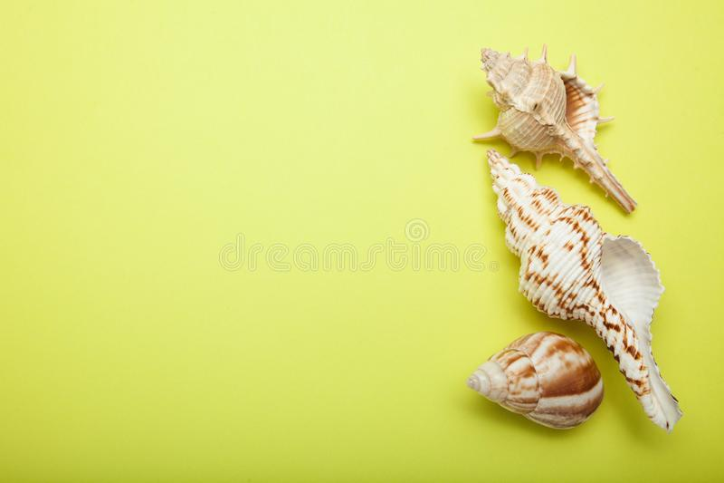 美丽的贝壳的一汇集在黄色背景,文本的空的空间的 免版税图库摄影
