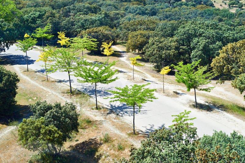 美丽的路在有年轻树的公园 免版税库存照片