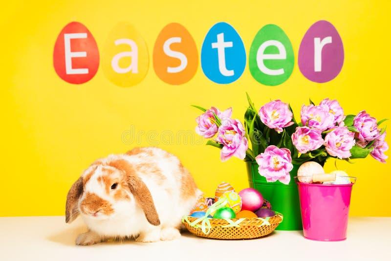 美丽的逗人喜爱的兔子用东部五颜六色的鸡蛋 免版税库存照片