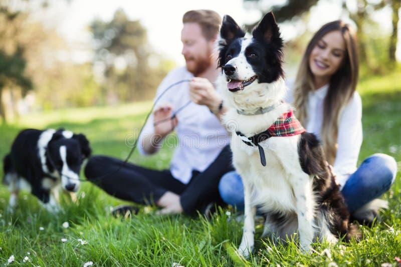 美丽的逗人喜爱的狗本质上为步行采取由人 免版税库存照片