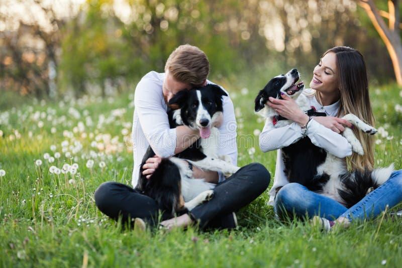 美丽的逗人喜爱的狗本质上为步行采取由人 库存照片