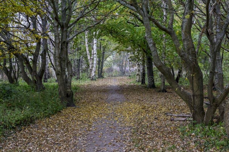 美丽的道路在秋天期间的森林里 库存照片