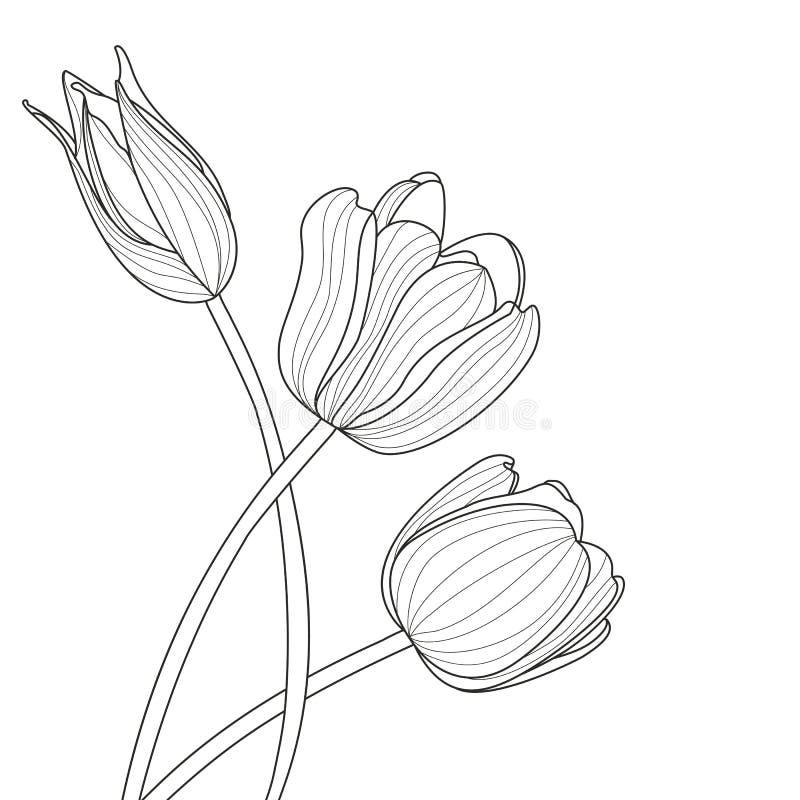 美丽的郁金香开花线例证 传染媒介抽象黑色 皇族释放例证