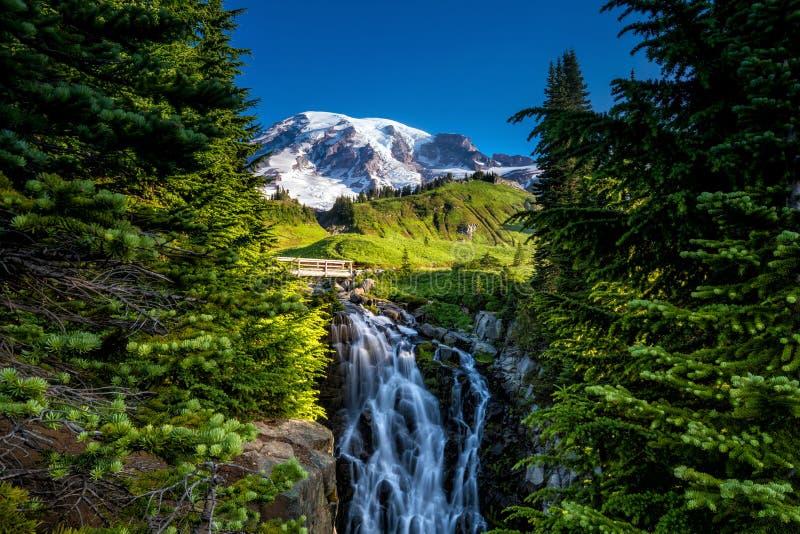 美丽的野花和芒特雷尼尔,华盛顿州 免版税库存图片
