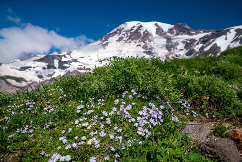 美丽的野花和芒特雷尼尔,华盛顿州 免版税库存照片