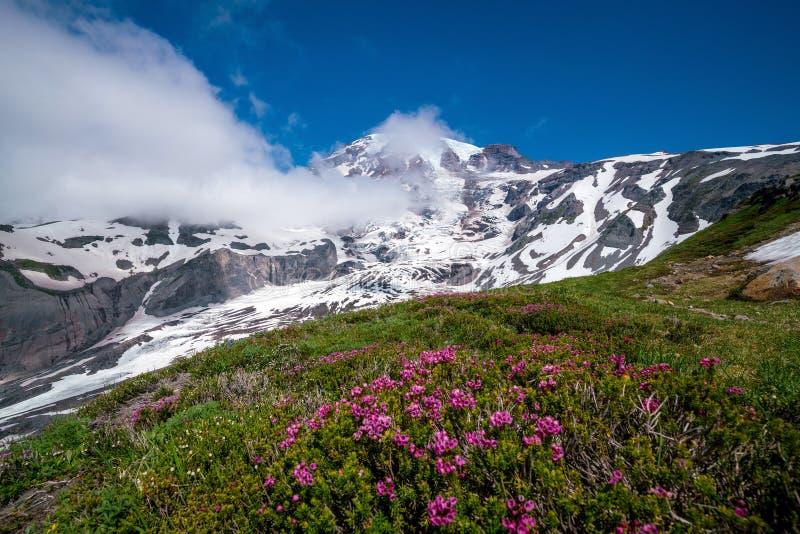 美丽的野花和芒特雷尼尔,华盛顿州 库存图片