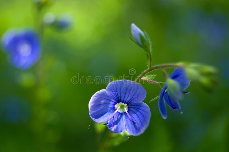 美丽的野花在夏天增长户外 库存照片