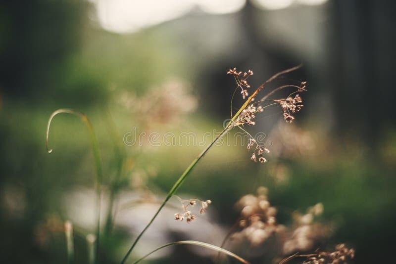 美丽的野花,关闭在森林植物群背景的干草本  愉快的世界地球日概念 环境保存 免版税库存图片