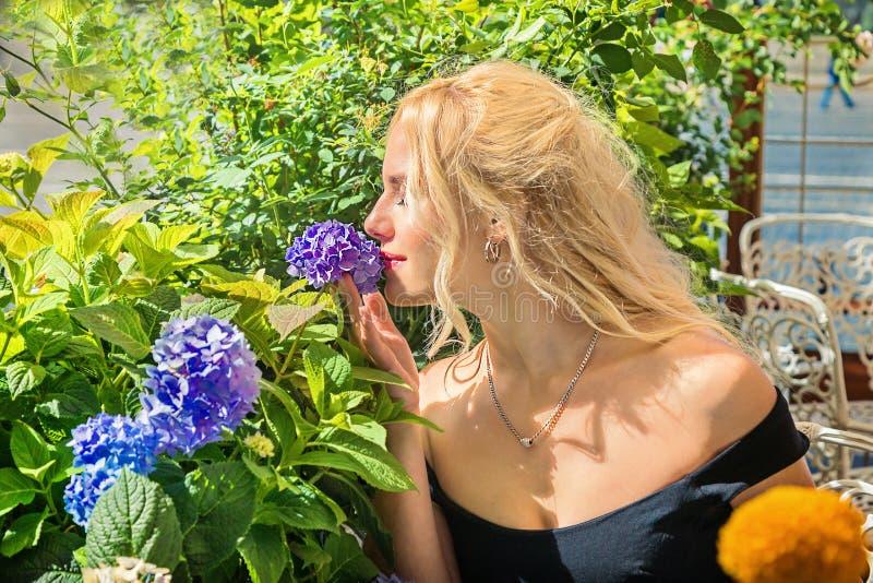 美丽的金发碧眼的女人嗅到八仙花属 秀丽na的概念 图库摄影