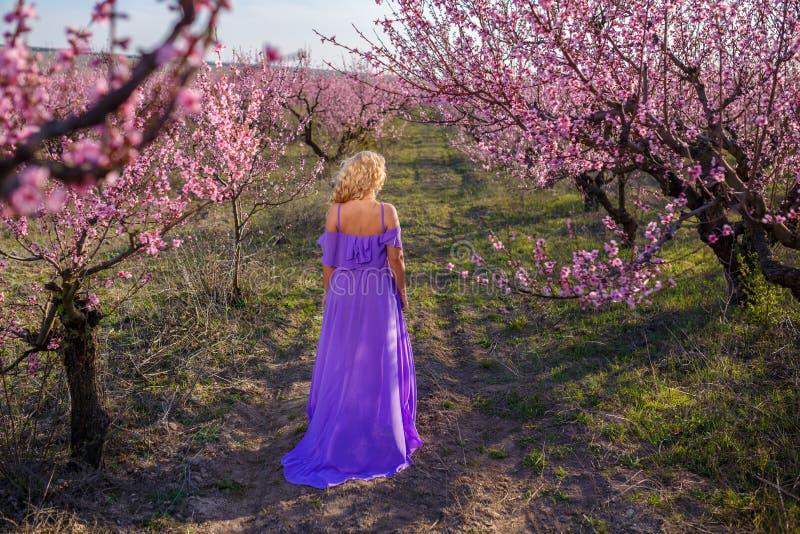 美丽的金发碧眼的女人在一个开花的庭院里,桃子庭院在春天在一个晴天 库存图片