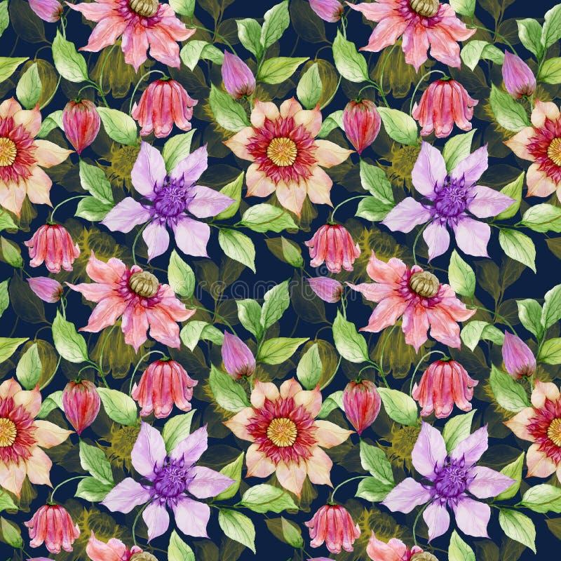 美丽的铁线莲属在上升的枝杈开花反对黑背景 无缝花卉的模式 多孔黏土更正高绘画photoshop非常质量扫描水彩 皇族释放例证