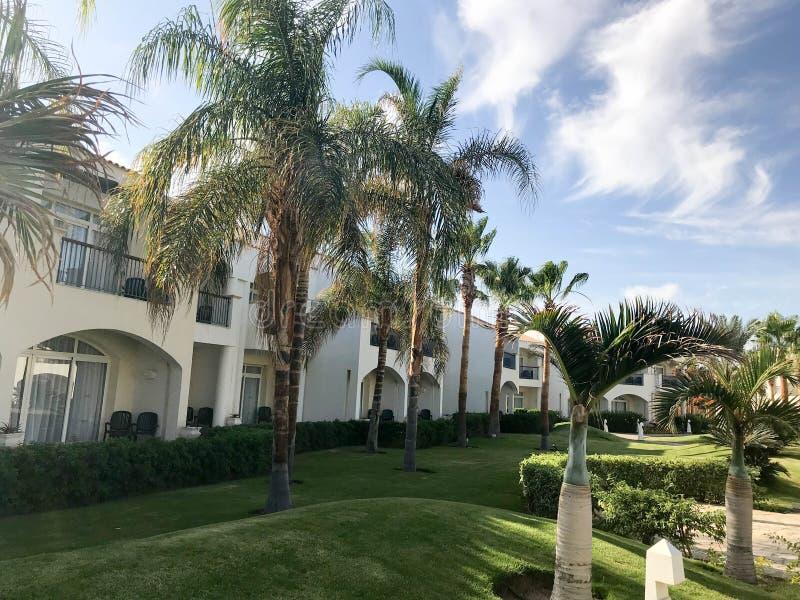 美丽的阿拉伯回教白色石大厦,村庄,棕榈树热带绿色背景的房子与大叶子的 免版税库存图片