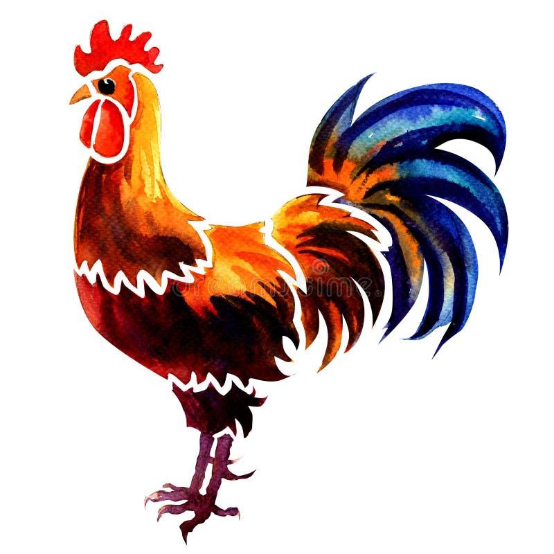 美丽的雄鸡,被隔绝的明亮的红色公鸡,在白色的水彩例证 皇族释放例证