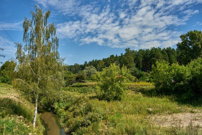 美丽的风景河和桦树在森林中间 免版税库存图片