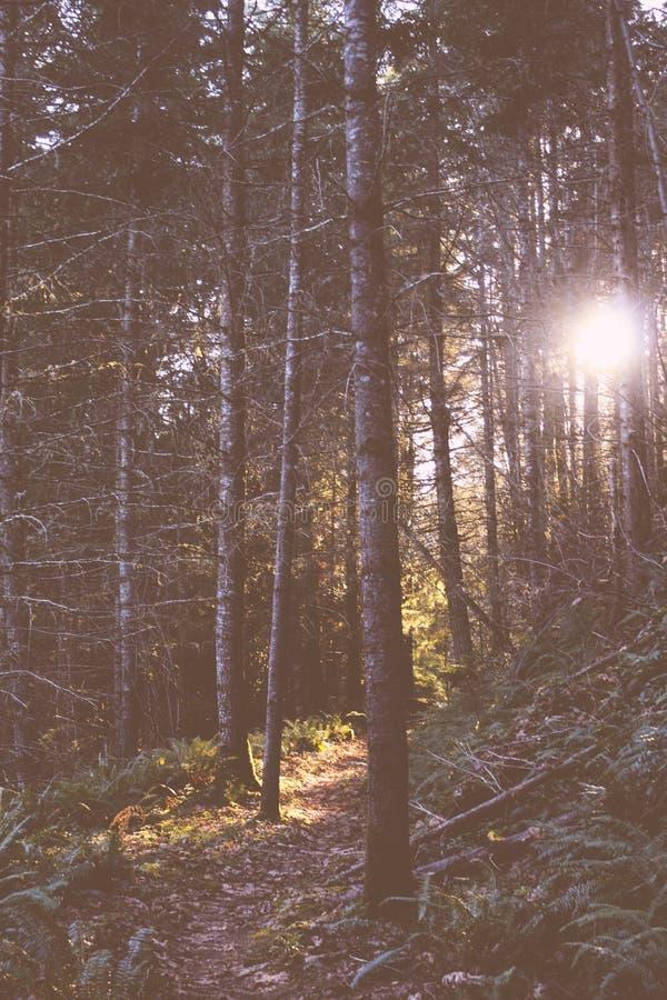 美丽的高大的树木在森林里 库存照片